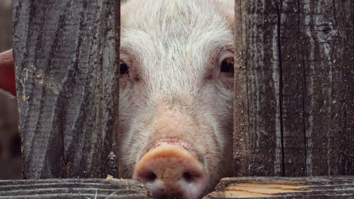 مهد آزادی در خوردن حیوانات