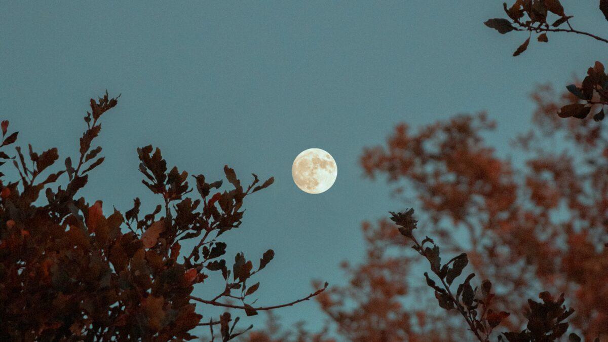 رخش چون ماه شب چهارده است