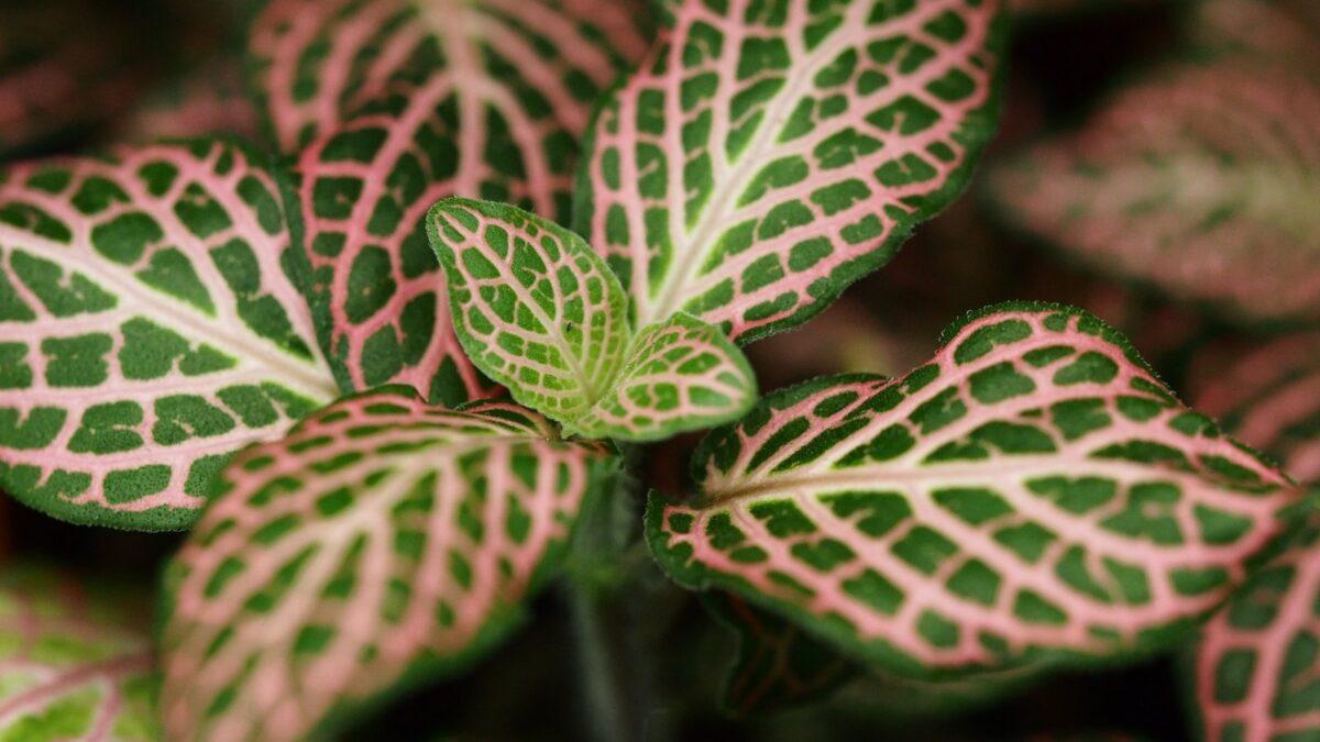 گیاهِ عصبی