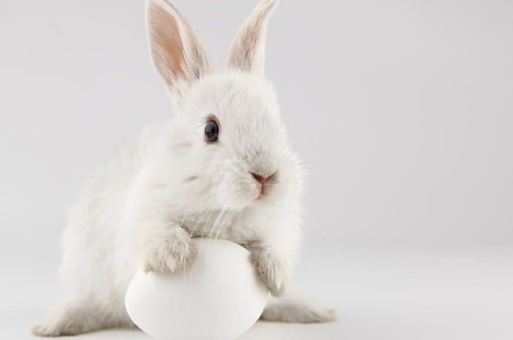 آیا می دانید فلسفه عید پاک چیست؟