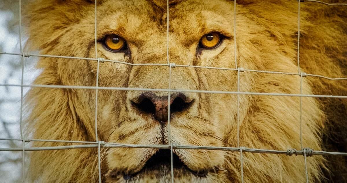 شیرها، استخوانها و گلولهها در جشنواره مونت کارلو